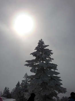 写真 2013-02-17 10 18 08.jpg